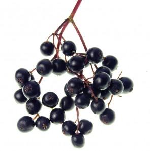 Pure Elderberry
